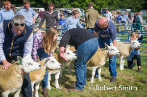 Sheep judging-14