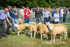 Sheep judging-16