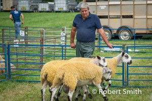 Sheep judging-19