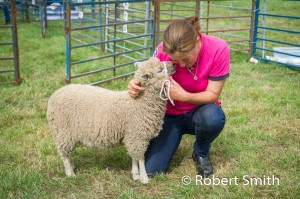 Sheep judging-22