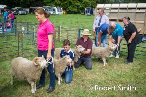 Sheep judging-24